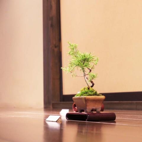 盆栽ミニ5