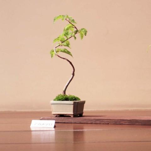 盆栽ミニ3