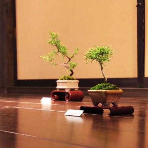 盆栽ミニ2