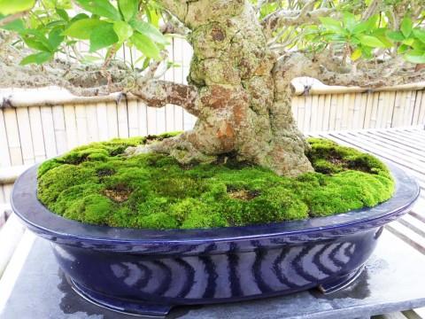 カリンの木の根元