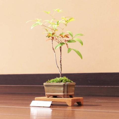 盆栽ミニ6