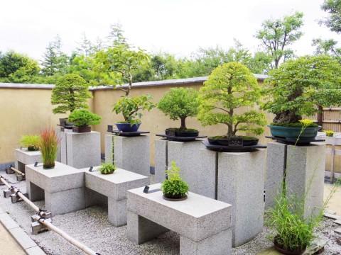 盆栽苑風景2