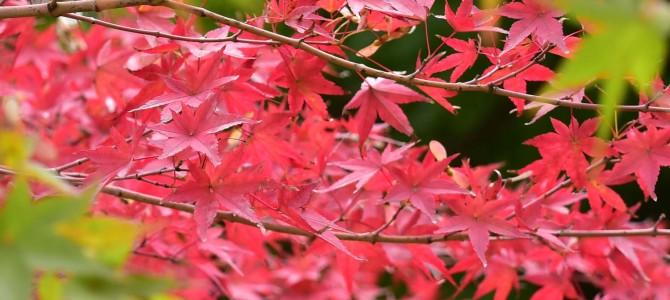 小石川後楽園で紅葉狩り~ヽ(´▽`)/