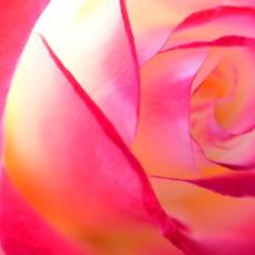 神代植物公園~ ちょっぴりバラが!