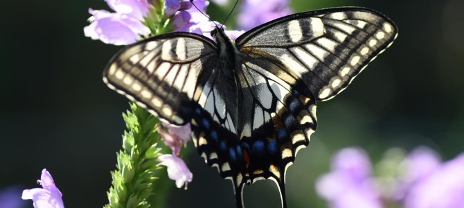 蝶の写真を撮ったよ♪