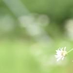葡萄畑に咲いてたお花たち♪゜