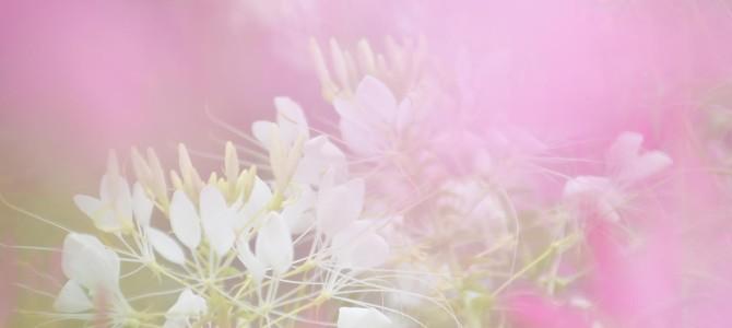 お花の写真撮りました♪