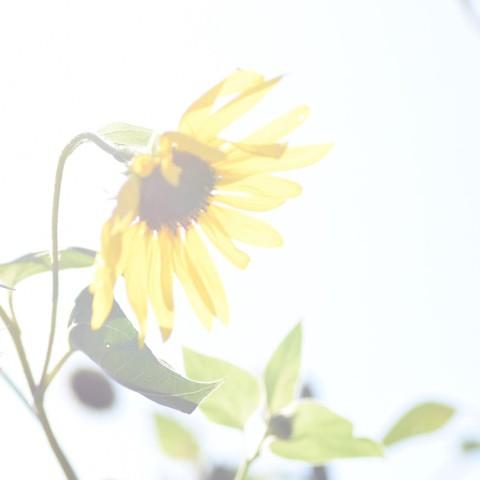 himaDSC_0813