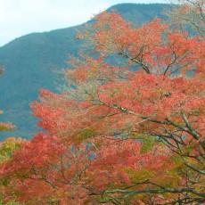 箱根で紅葉を見てきたよ~ヽ(´▽`)/