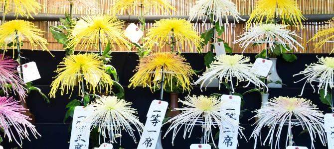 日比谷公園の菊展示会の件