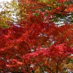 箱根で色々見てきたよ~ヽ(´▽`)/