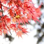 代々木公園は秋真っ盛り~ヽ(´▽`)/
