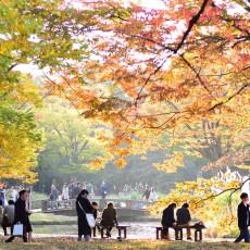 代々木公園が秋めいてきた件