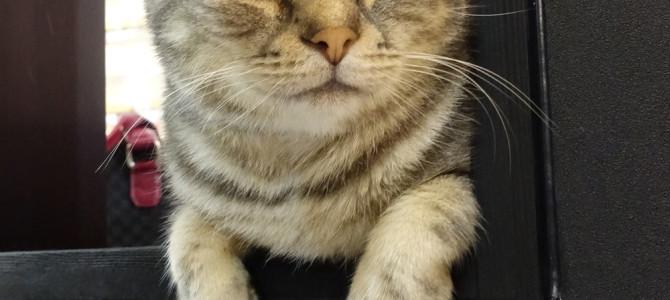 両国の猫カフェ<江戸ねこ茶屋>(≧∇≦)/