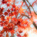 秋の名残り