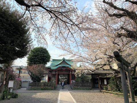 m筑土八幡神社(つくどはちまんじんじゃ (4)