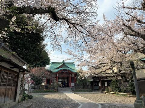 m筑土八幡神社(つくどはちまんじんじゃ (2)
