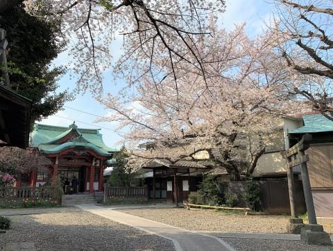 m筑土八幡神社(つくどはちまんじんじゃ (3)