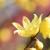 亀戸天神の梅が咲いたよ♪