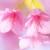桜が咲きましたね~~ヽ(´▽`)/