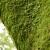 大木ときのこをめぐる世界