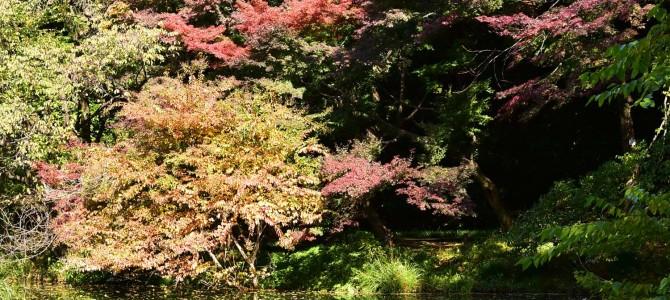 小石川植物園に行ってきました~ヽ(´▽`)/