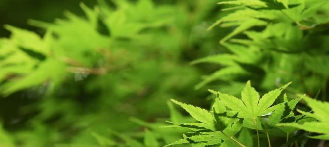 神代植物公園 再び! ~青紅葉