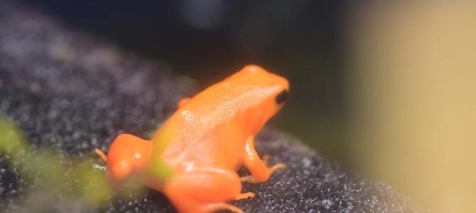 10年ぶりに上野動物園~ヽ(´▽`)/ -爬虫類館-