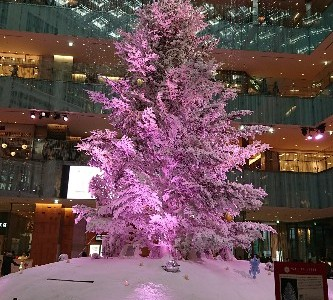 kitteのクリスマスツリー♪