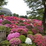 GW ~Eさんが根津神社に行った件