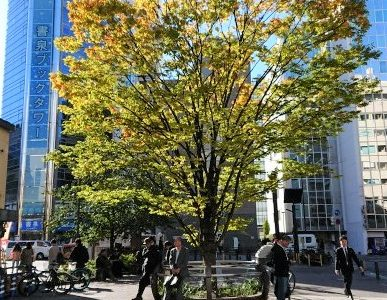 秋葉原公園の紅葉