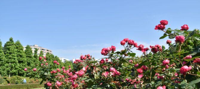 久しぶりに、新宿御苑に行きました。