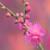 梅が満開ですよ~。ヽ(´▽`)/
