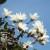 ~武蔵野の春~